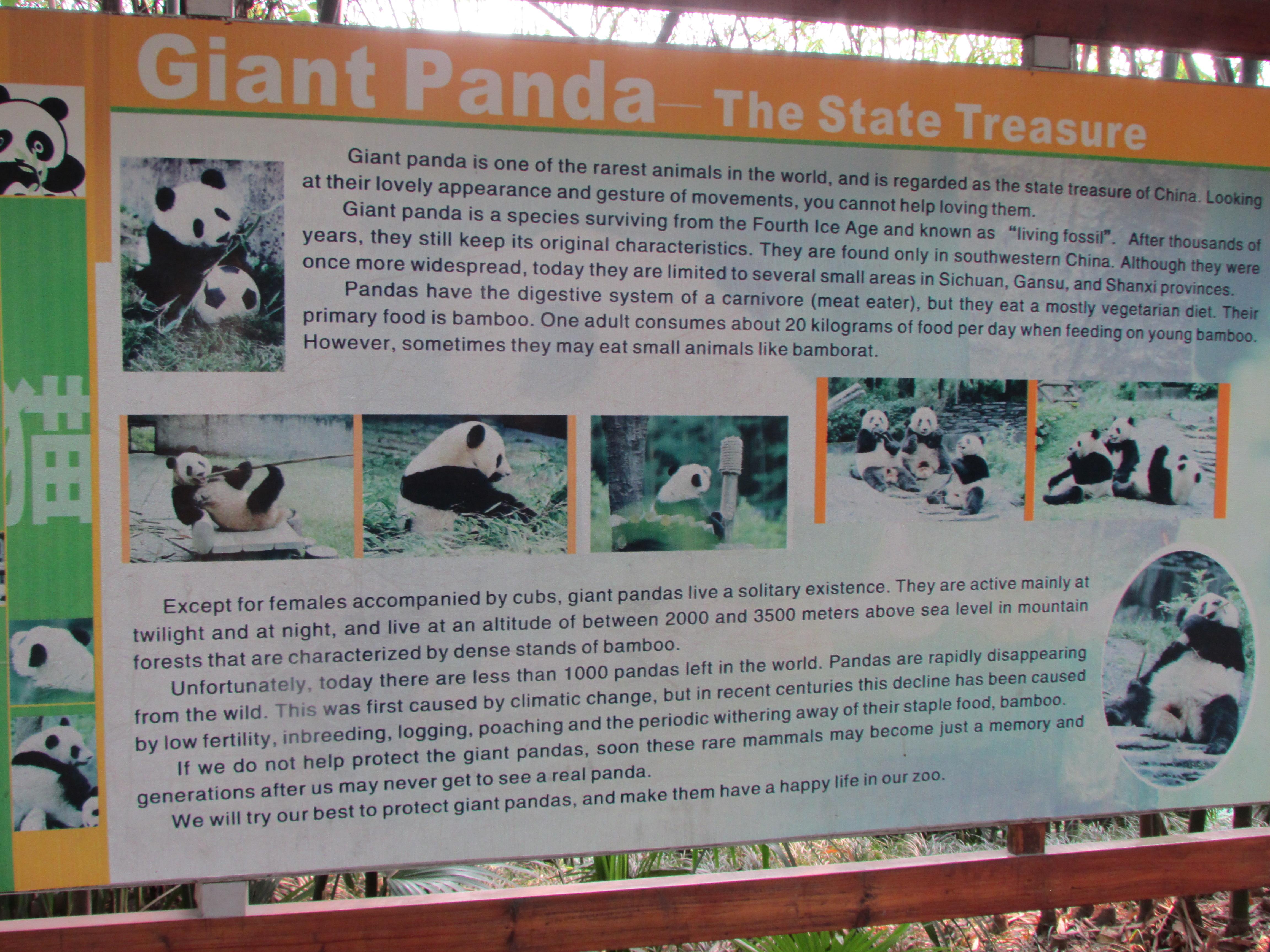 Panda Information