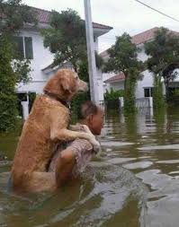 guy and dog in flood